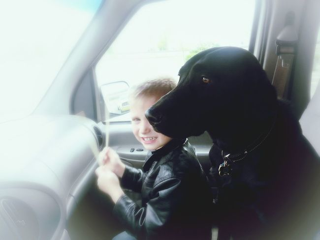 Boy and dog in car. Dog Pets Car Vehicle Smartphone Photography Child Everyday Lives Family Boy Kid Childhood Togetherness Labrador