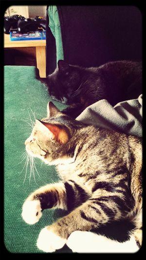 lördags slapp i soffan Relaxing Cats