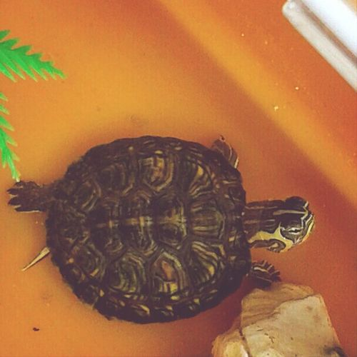 I love my turtle ? First Eyeem Photo