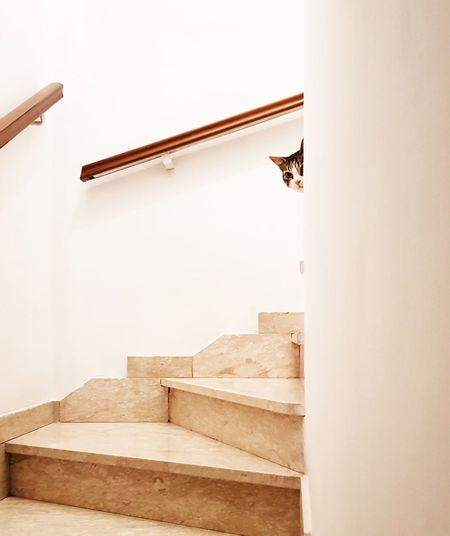shy cat Cat Pets Cute Pets EyeEm Best Shots EyeEm Animal Lover Steps And Staircases Minimalism Shy Interior Design Indoors  Looking At Camera Careful EyeEm Selects EyeEmNewHere Indoors  Home Interior No People Day