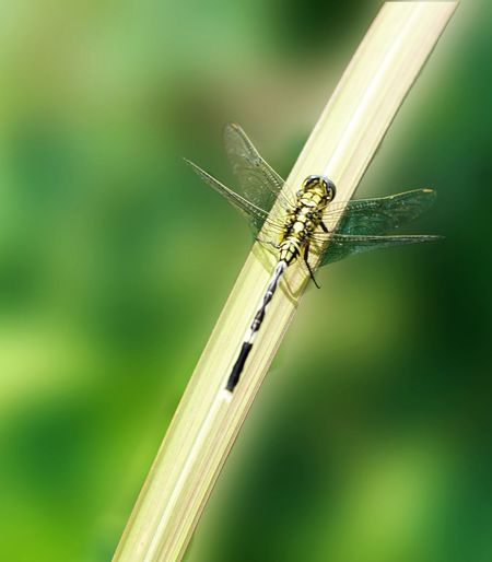 Soldier dragonfly Insect Animal Wildlife Invertebrate Animals In The Wild Animal Themes Animal One Animal Outdoors Dragonfly Animal Wing Nature Zoology Day Damselfly Plant No People Green Color Grass Focus On Foreground Close-up