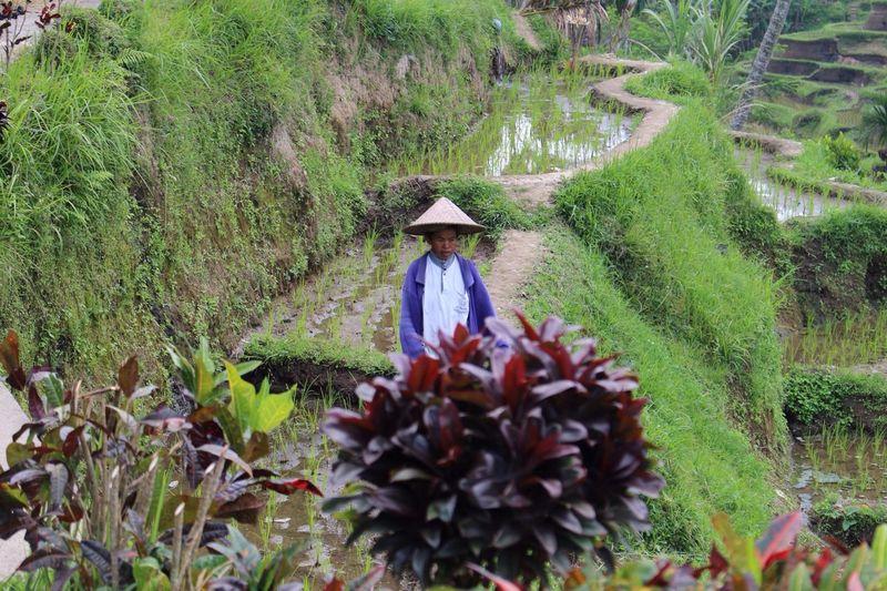 Rice Terraces Balinese Woman The Purist (no Edit, No Filter) Enjoying Life
