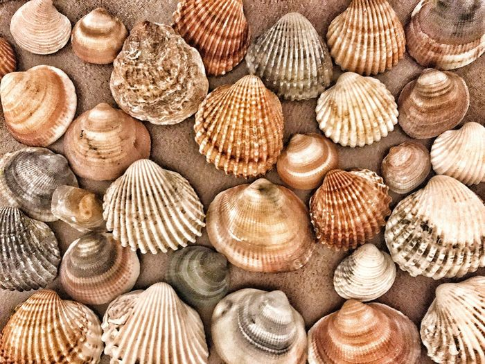 Animal Shell Backgrounds Full Frame Seashell Variation Pattern No People Large Group Of Objects Textured  Close-up Day Outdoors EyeEm Best Shots EyeEm Nature Lover EyeEmBestPics The Week On EyeEm