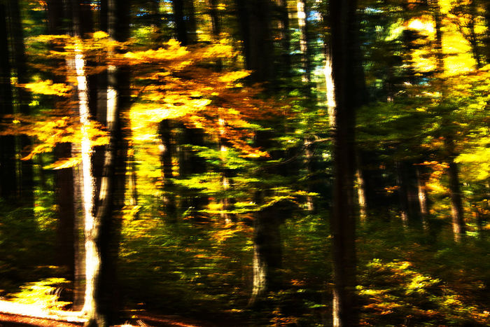 Abstract Abstract Photography Autumn Autumn Colors Beauty In Nature Close-up Day Fall Fall Beauty Forest Forest Collection Forest Photography Nature No People Outdoors Romania
