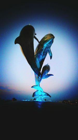 Puerto Vallarta Malecon Fuentes FuenteLuminosa Delphin Delfines