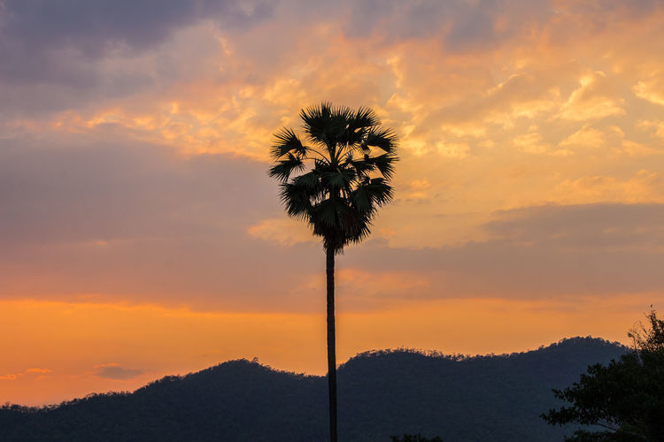 Nature Sky Sunset Cloud - Sky Beauty In Nature Tree Scenics - Nature Orange Color Non-urban Scene Outdoors Low Angle View Nature Palm Tree Romantic Sky Coconut Palm Tree Tree Trunk