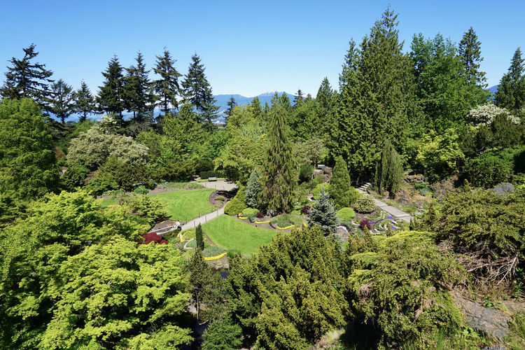 2016 Beauty In Nature Canada Clear Sky Forest Green Color Growth Hiking Landscape Lush Foliage Mountain Nature Outdoors Park Queen Elizabeth Park Sky Tree Vancouver カナダ クイーンエリザベスパーク バンクーバー