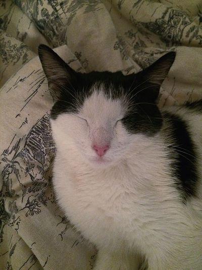 Кошка япошка Cat Котейка Соня дрыхлик сон Sweethome дома
