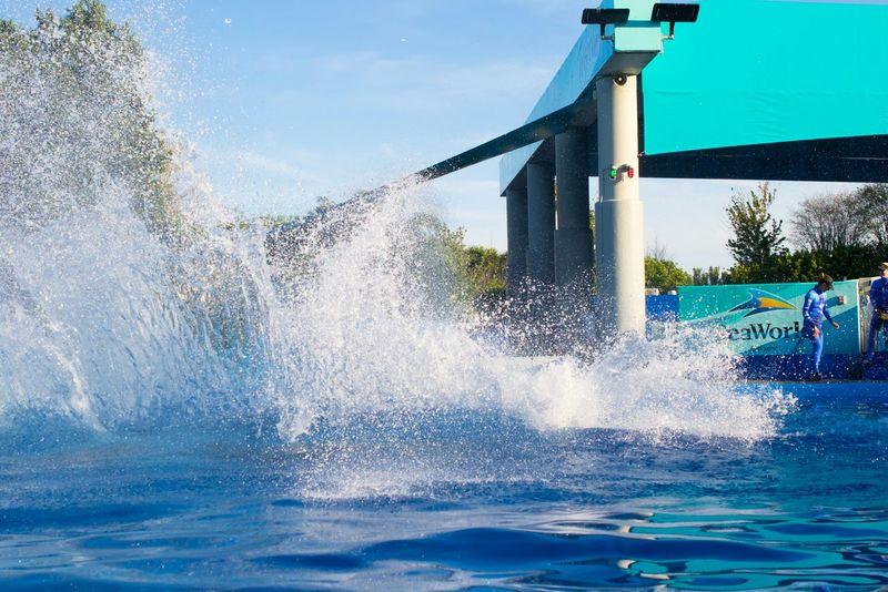 Water Drops Jamp Killer Whale Orlando Sea World USA Fountain Traning