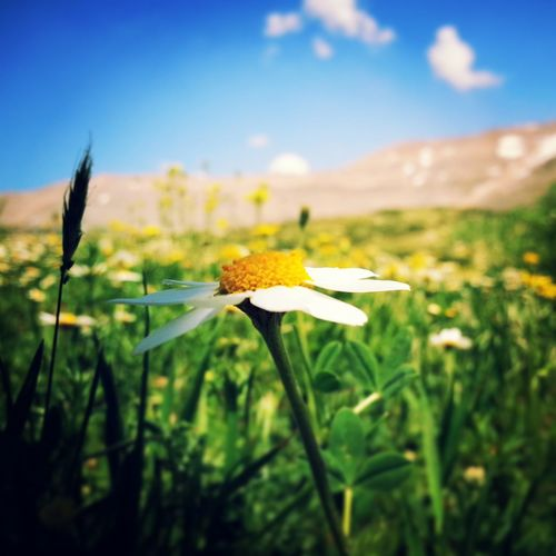 A flower with Mount Sannine as a background - Near And Far Nature EyeEm Nature Lover EyeEm Best Shots