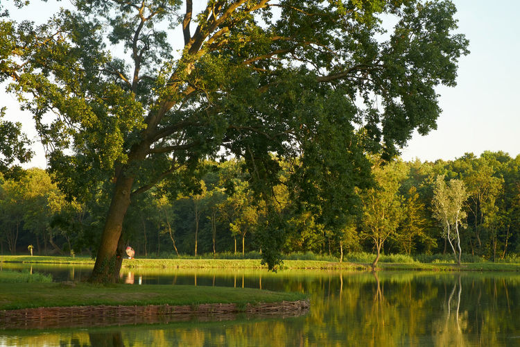 Park Beauty In Nature Day Forest Lake Landscape Nature No People Outdoors Park Pond Pond Water Reflection Scenics Tranquil Scene Tranquility Tree Water
