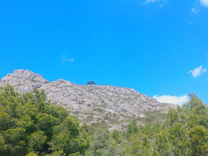 lonely tree Lonely Tree Tree Mountain Tree Area Blue Pinaceae Mountain Peak Pine Tree Sky Landscape Rocky Mountains