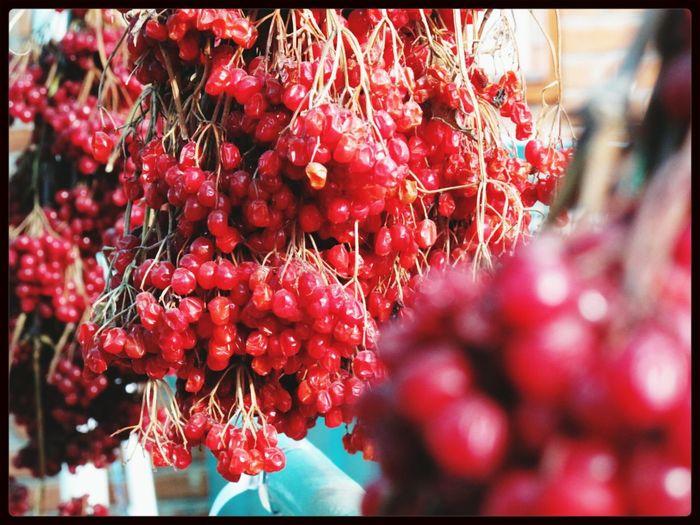 калина красная Viburnum Color Photography Country Life