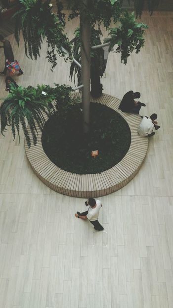 Tree High Angle View Adults Only Shoopingmall People Sitting With Other People People Sitting People On Shopping Mall People Day