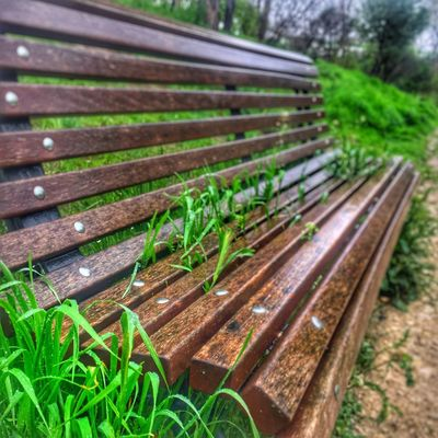 Banco Grass Focus On Foreground Close-up Wet Beauty In Nature Drop High Angle View Outdoors Field Plant Green Color Growth Wood - Material Nature Grass Plant Part Leaf No People Field Day Land Beauty In Nature Selective Focus Bench Brown Autumn Mood