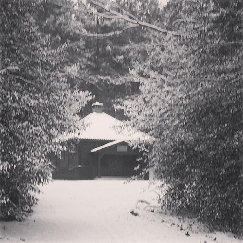 Jagdhütte IlexAquifolium SandkrugerWald Sandkrug Hatten OL Snow Schnee