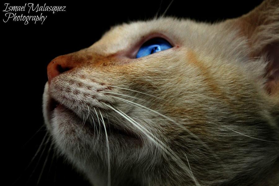 Portrait Photo Amia Smile