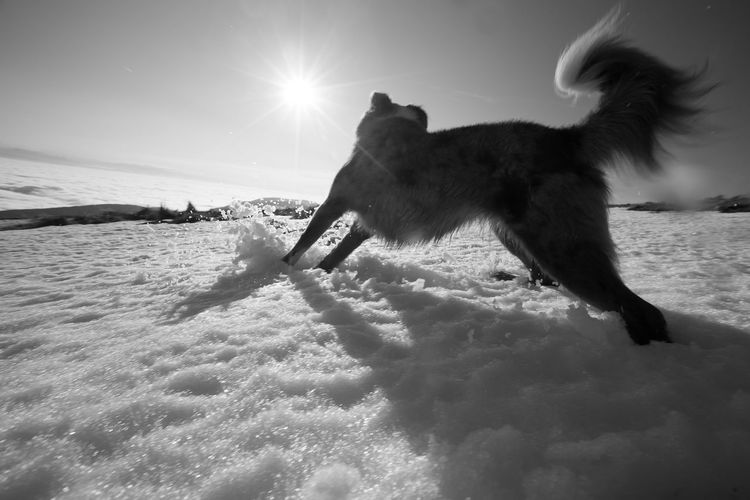 Dog Happiness Hund Lbensfre Lbensfreude Schnee Snow Sonne