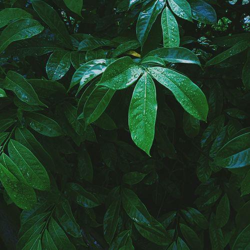 Full frame shot of dew on plant