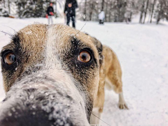 EyeEm Selects Dog Snow Skiing Snow ❄