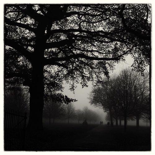 Regents Park Lostamongstthelost Capture The Moment Foggy Morning My Winter Favorites Melancholic Landscapes