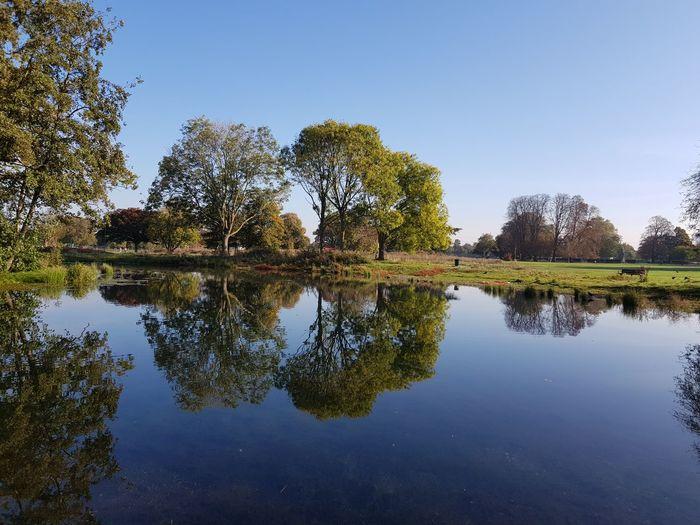 Tranquil Mirror