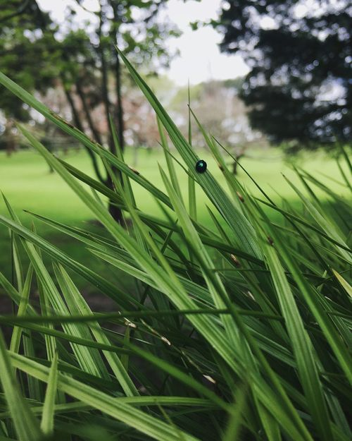 Green Grass Growth Green Color Blade Of Grass Close-up Focus On Foreground Plant Field Green Nature Selective Focus Freshness Beauty In Nature Tranquility Fragility Day Surface Level Vibrant Color Grass Area Lush Foliage