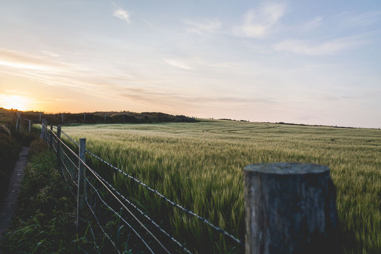 Fenced Agriculture Beauty In Nature Cultivated Land Fence Field Grassy Green Color Horizon Over Land Landscape Nature Photography No People Outdoors Rural Scene Sunset Sunset_collection Travel Photography Traveling Wales EyeEm Selects Your Ticket To Europe An Eye For Travel Visual Creativity The Great Outdoors - 2018 EyeEm Awards British Culture The Minimalist - 2019 EyeEm Awards