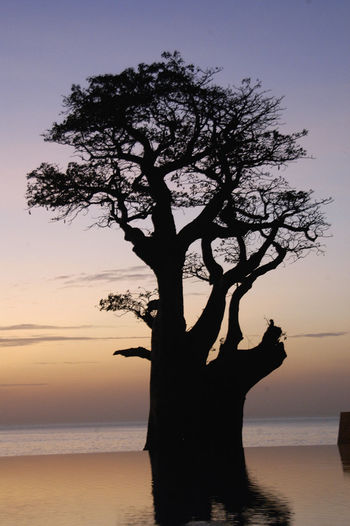 Having a drink in Palmarin Senegal Palmarin Baobab Baobab Tree Beauty In Nature Horizon Over Water Outdoors Sea Senegal Silhouette Sine Saloum Delta Sine-saloum Delta Sunset Swimming Pool Tranquil Scene Tranquility Tree Tree Trunk Water