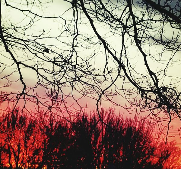 Nature Tree Beauty In Nature No People Outdoors Branch Sky Tranquility Sunset Scenics Bare Tree Growth Day My Photography Pink Color Sunlight Nature Tranquility Peaceful View
