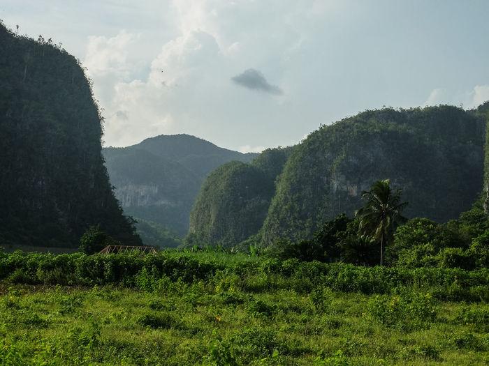 Wooded mountain range