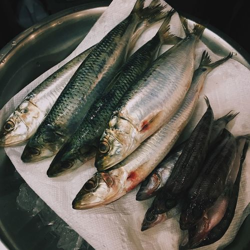 Food Preparation Seafoods Fish Food And Drink Food Freshness Raw Food Healthy Eating Indoors  Close-up