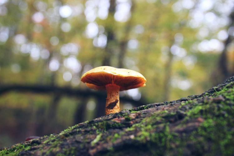 Little mushroom! Nature Georgia Atlanta Natmotion Photography Loving Life! Check This Out Mushroom Beautiful Canonphotography Picoftheday