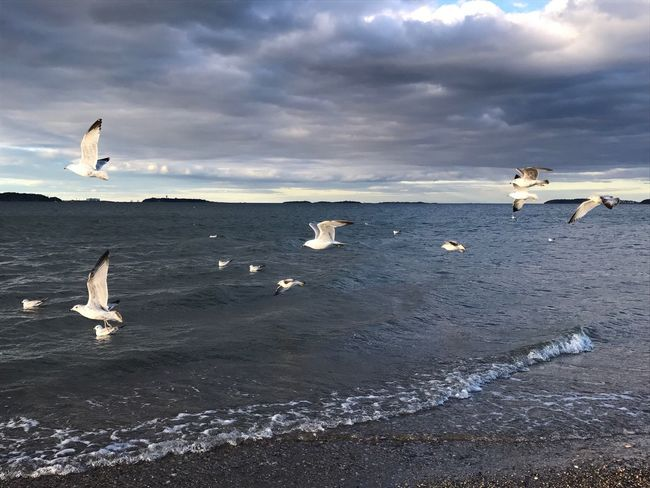 Happy Saturday! 💙 Sea And Sky Sea Beauty In Nature Beach Seagulls Flock Of Birds The Great Outdoors - 2017 EyeEm Awards Nofilternoedit
