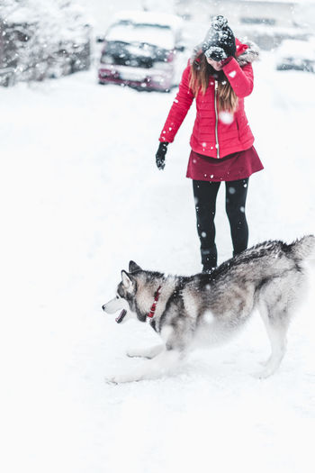 Husky Snow Winter Cold Temperature One Person Mammal One Animal Clothing Domestic Animals Real People Domestic Pets Day Full Length White Color Nature Field Warm Clothing Outdoors Extreme Weather Snowing