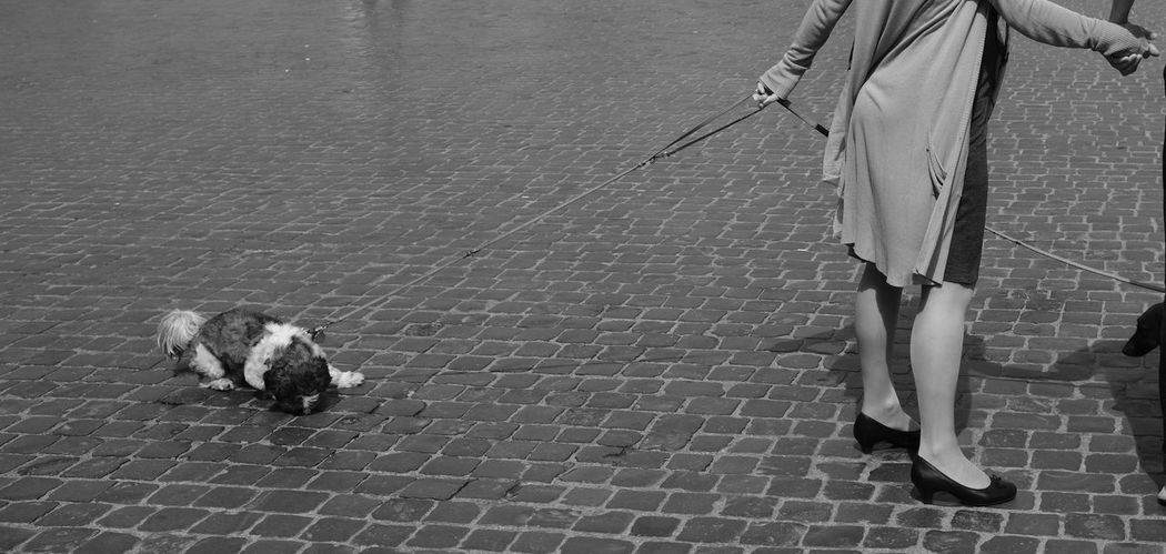 Rome Spanish steps dog and owner Italy Fujifilm Xpro2 Cobblestone City Rome Spanish Steps Dog B&w Street Photography Travel Photography Blackandwhite X-PRO2 People