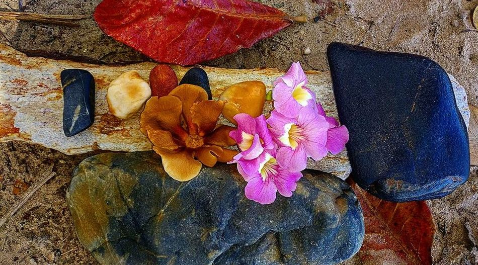 Beach Flower Close-up No People Outdoors Oneplus3T Phonecamera Sand Nature Beauty In Nature Poui Stones Gatheringslikethese Leaves Day Flower Head
