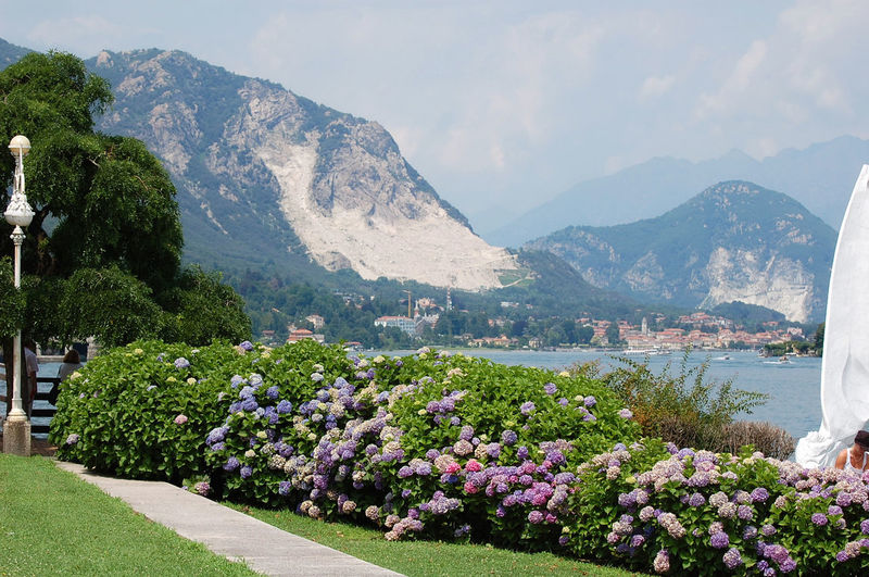 View of hydrangea flowers, mountains and Maggiore lake in Stresa Blooming Flower Hydrangea Italy Lake Landscape Maggiore Mountain Mountain Range Nature Sky Snow Stresa Travel Destinations