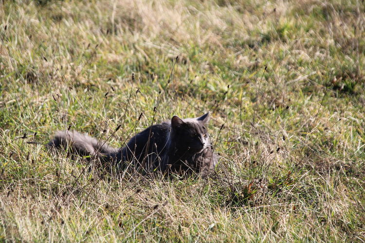 Cat resting in a field