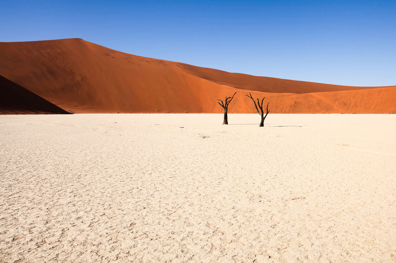 Beautiful Beauty In Nature Blue Colors Deadvlei Death Valley Desert Desert Desery Landscape Landscape_photography Namibia Nature Nature Outdoors Pamorama Red Sand Sand Dune Scenics Shadow Sossusvlei Sunlight Tranquil Scene Tree