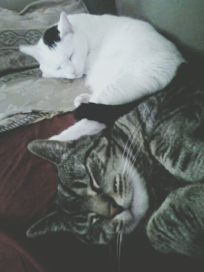 Beautiful Pets My Kitties  I Love Cats Hello World Hanging Out Just Chillin'