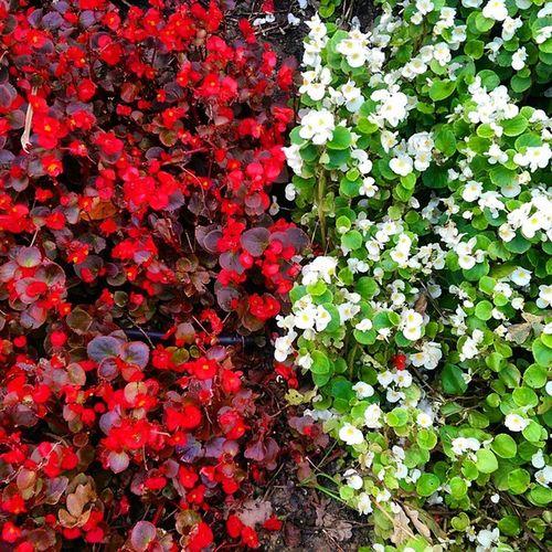 Emirgan Koru Park çiçek flower color istanbul nature doga manzara red white