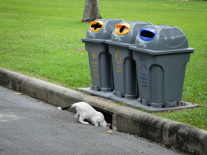 Animal Themes Cat Garbage Green Color Junk Searching Trash Trashcan