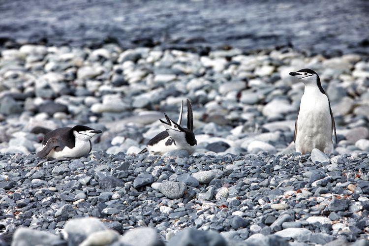 Close-up of bird on shore