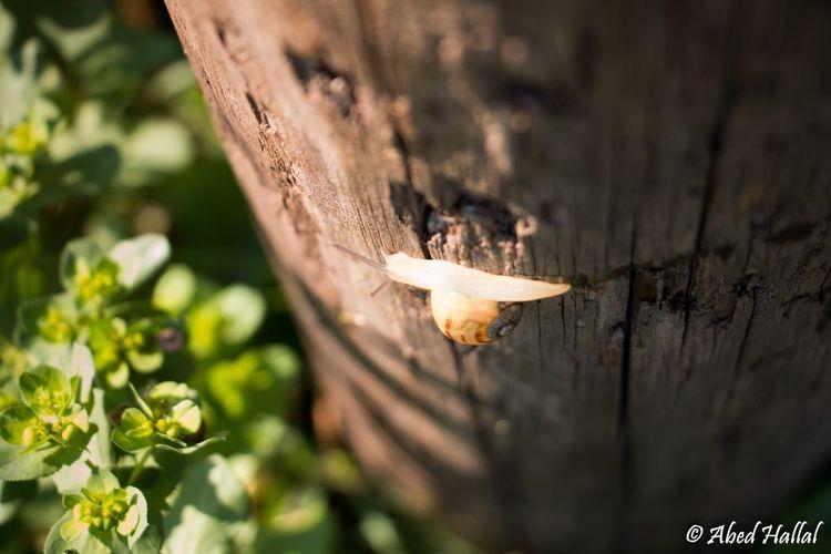 Snail Lebanon Bokeh Morning Taking Photos Animals Nature