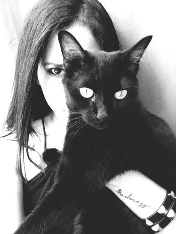 Madness Evil Cat