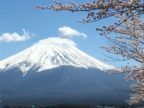 Japan Sakura Blossom Fuji Mountain Mountain Beauty In Nature Nature Scenics Snowcapped Mountain Snow Tranquility Peak Blue Tree Branch Landscape No People Low Angle View Outdoors Cloud - Sky Sky Majestic Day Tranquil Scene