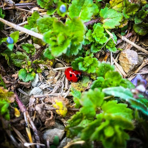 LADY BUG 🐞 Insects Beautiful Nature Wild & Pure Ladybug Collection Spring Is Coming  Insect Animal Themes One Animal Wildlife Leaf Nature Animal Wildlife Close-up Ladybug Plant Tiny