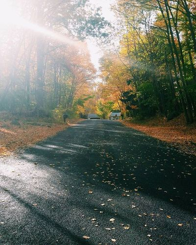 A quiet Guilford road in late October VSCO Vscocam Autumn Fall October Newengland Thatsdarling Liveauthentic Pursuepretty Postitfortheaesthetic Northeast Flashesofdelight Livethelittlethings Mytinyatlas Connecticut Guilford Connecticut Guilfordroads Roads Quiet Foliage Passionpassport