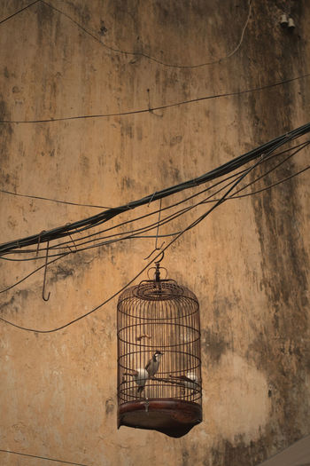 Locked Wall Background Texture Bird Cage Cable Cage Dirt Hanging Lonley Want Freedom
